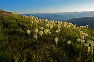 Beargrass at sunrise from Grizzly Peak looking towards the Yaak Valley and the Purcell Mountains in summer. Grizzly Peak Roadless Area in the Kootenai National Forest, northwest Montana.