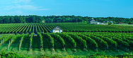 MACARI VINEYARDS, 150 Bergen Avenue  Mattituck, NY 11952, New York, USA