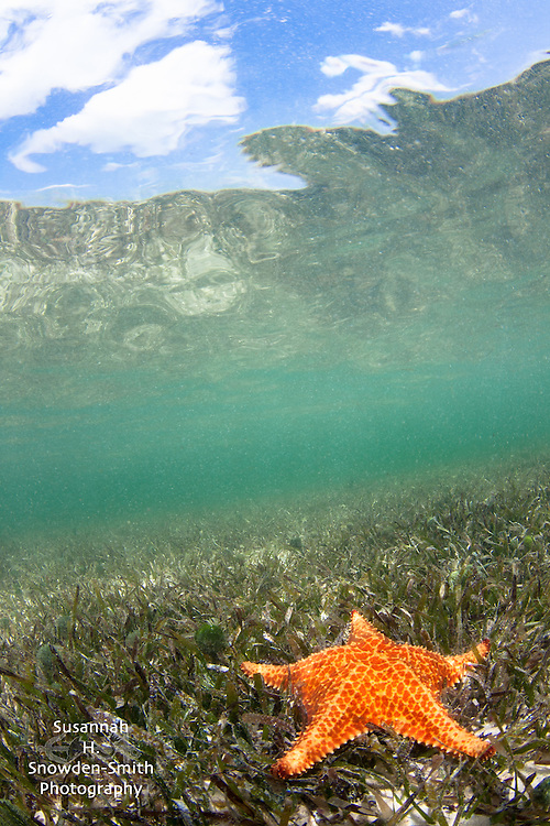 """Starfish and Sky"" - Starfish Point, Grand Cayman"