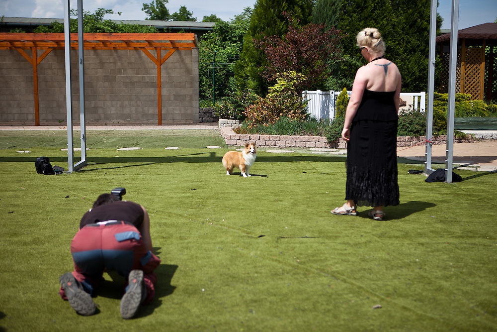 Men on his knees photographing a dog during the Prague Expo Dog Exhibition.