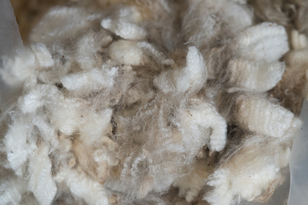 Wool production, Rio Verde, Chile, south america