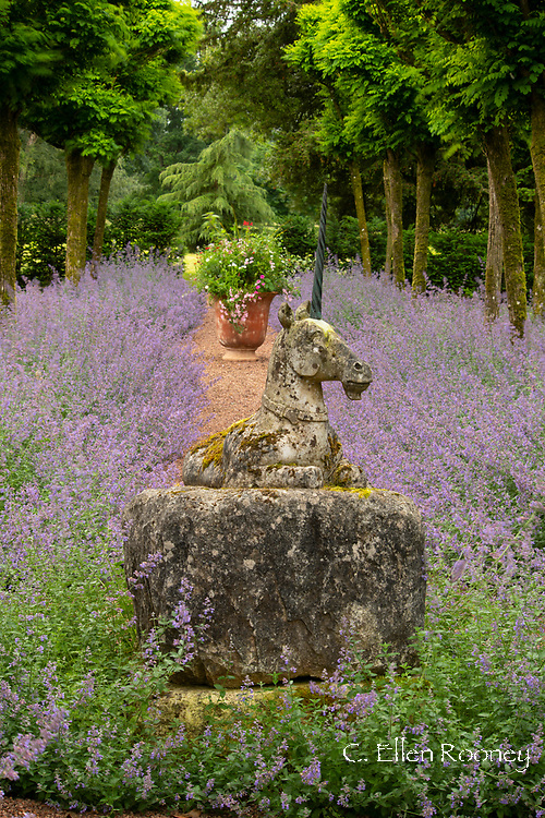 Nepeta under Robinia pseudoacacia 'Umbraculifera' and a stone statue of a unicorn in  the Unicorn Garden at Cothay Manor, Greenham, Wellington, Somerset, UK