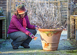 Inspecting a terracotta pot that has been damaged by frost