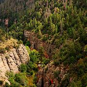 Sunlight illuminating the pine covered slope of Walnut Canyon