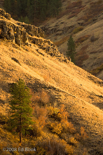 Late afternoon autumn light in the canyon of the Grand Ronde River, Blue Mountains, Oregon, USA