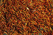 Chillies laid out for sale in a backstreet in the PMG Colony in Mankhurd.