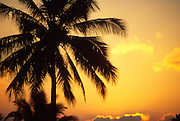 Sunset with palm trees<br />