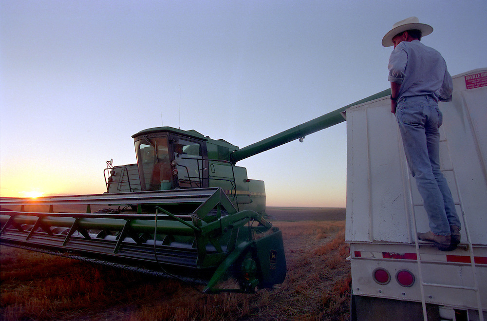 A farmer unloads wheat into a truck during wheat harvest in eastern Colorado