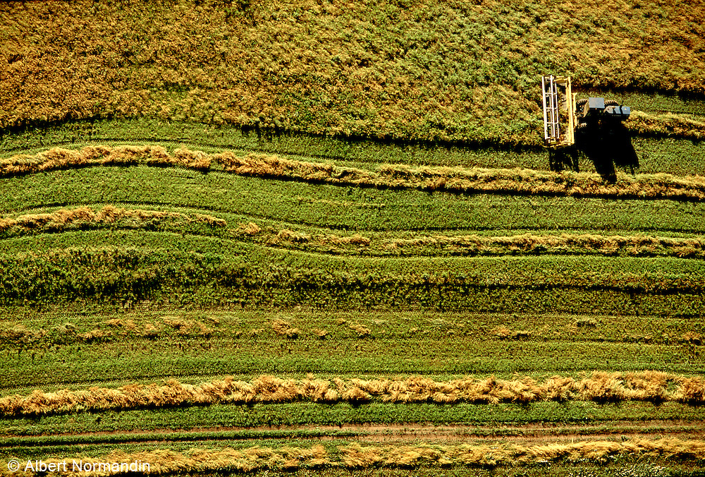 Aerial view looking down on harvester machine working field, yellow and green