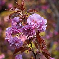 20200422-flowers