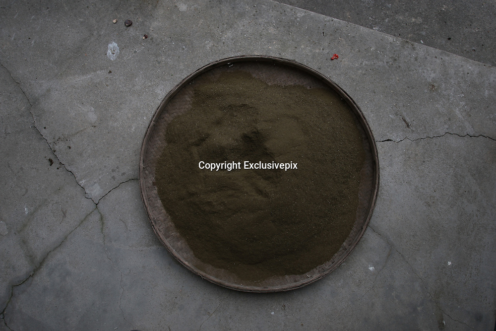 XIANGTAN, CHINA - OCTOBER 29: (CHINA OUT)<br /> <br /> Drinking Faeces Of Cow And Sheep To Treat Cancer<br /> <br /> Faeces powder from cow and sheep through drying, toasting, grinding at Jinshi village on October 29, 2014 in Xiangtan, Hunan province of China. Over 20 families in Jinshi village prevent and treat disease by drinking water of faeces from cows and sheep because a local elder woman said that faeces of cow and sheep through drying, toasting, grinding and then giving water to drink can prevent and treat disease and her cancer got better after drinking for eight months. <br /> ©Exclusivepix