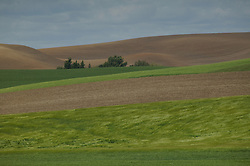 Fields of green and brown line the rolling hills of the Palouse area, Washington.