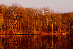 14 November 2009:  Golden morning sunlight drenches the leafless trees on the west side of Dawson Lake in Moraine View State Park north of Leroy in McLean County Illinois and reflect off the water of a still autumn lake.