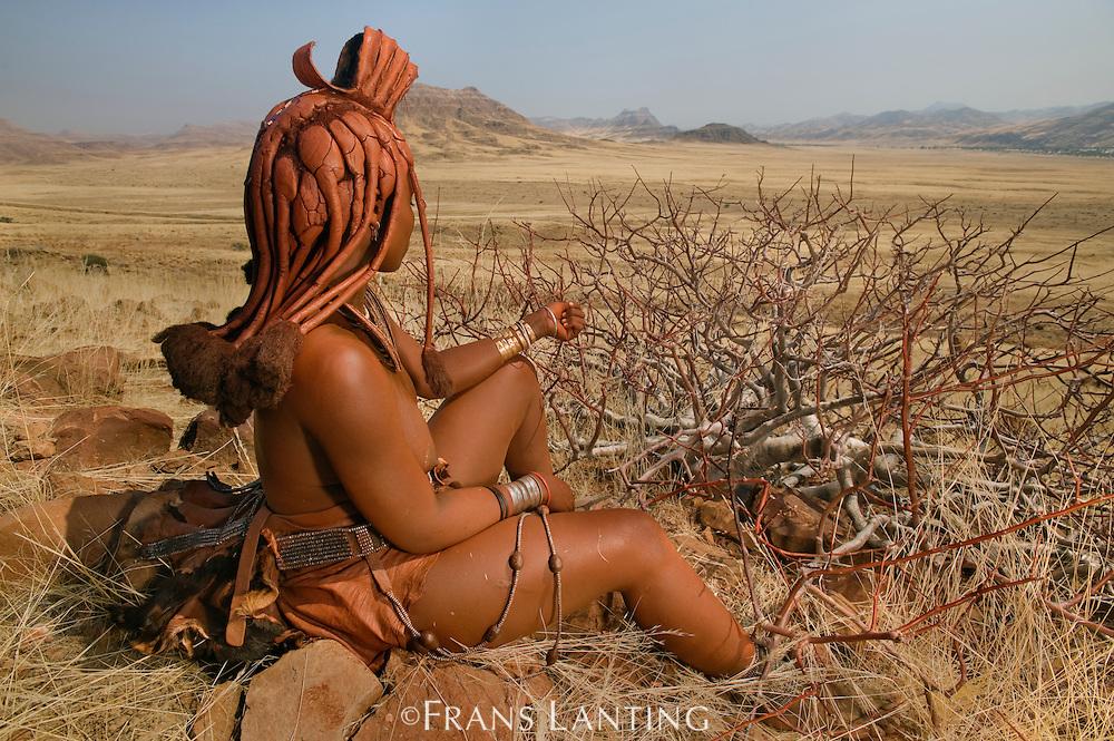 Himba woman harvesting resin from perfume plant, Commiphora wildii, Puros Conservancy, Damaraland, Namibia