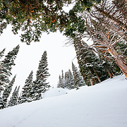 Tyler Hatcher skis the Teton Backcountry during a severe winter storm near Jackson Hole Mountain Resort, Teton Village, Wyoming.