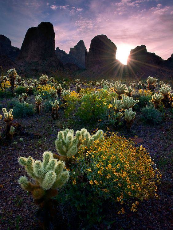 The sun rises over the desert in spring, Kofa Mountains, USA.