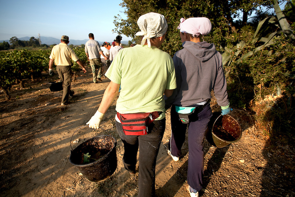 7/11/09. POLLESTRES (FRANCIA). En el trabajo. Las mujeres, a diferencia de los hombres, no se descuidan de proteger sus manos con guantes y su cabeza con gorra o pañuelo. FOTOGRAFIA: TONI VILCHES.