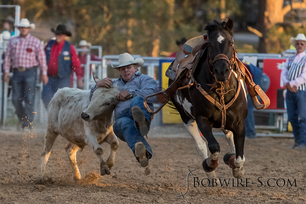 Steer wrestler Bray Huxtable makes his run during the second performance of the Elizabeth Stampede on Saturday, June 2, 2018.