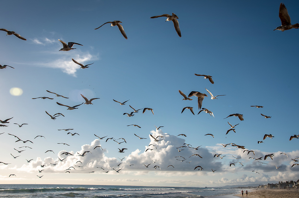 Couple running on Carlsbad State Beach through a large flock of seagulls.