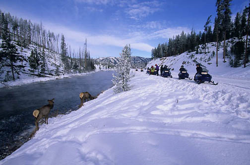 Yellowstone National Park, Snowmobiling in park. Viewing Elk along the Firehole River.