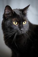 Sapa - Cat