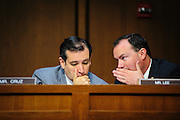 Senators Ted Cruz (R-TX)  and Mike Lee (R-UT) confer as Homeland Security Secretary Janet Napolitano testifies before the Senate Judiciary Committee during a hearing about border security, economic opportunity, and the Immigration Modernization Act.