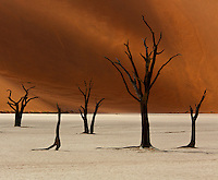 The magnificent dead trees in Namibia's Deadvlei draw beautiful graphical lines against the red walls of neighbouring towering dunes. A surreal, yet mesmerizingly beautiful, combination of elements, so typical of Namibia.