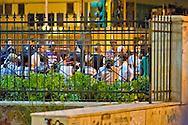 Roma 2 Luglio 2014<br /> Operazione di polizia e carabinieri contro lo spaccio di droga al Quartiere Pigneto, fermati molti  immigrati  e sequestrata  droga. Immigrati fermati dalla polizia in attesa di essere portati in questura.<br /> Rome, July 2, 2014 <br /> Operation of police  against drug dealing the Quarter Pigneto stopped many immigrants and seized drugs. Immigrants apprehended by the police waiting to be brought to the police station.