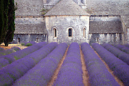 Orderly rows of lavender running up against Sénanque Abbey in Provence founded in 1148.  The monks who live at Sénanque grow lavender and tend honey bees for their livelihood.
