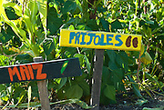 Berkeley, California, June, 2008-A sign hand painted by children labeling maiz and frijoles at the Edible Schoolyard. The organic garden was founded by Alice Waters of Chez Panisse to involve students in all aspects of farming.