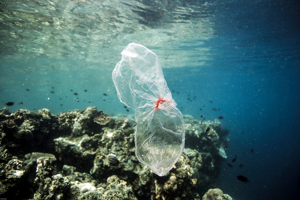 Plastic bag floating underwater at Bunaken Island, Sulawesi, Indonesia