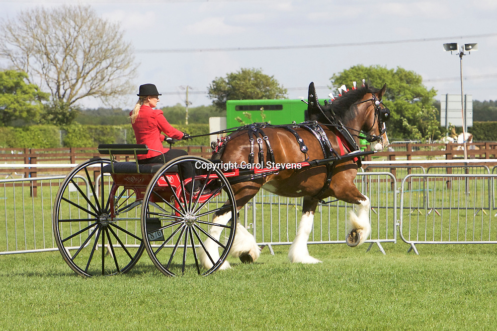 Notts County Show 2017<br /> Heavy Horse Two Wheeled Carts