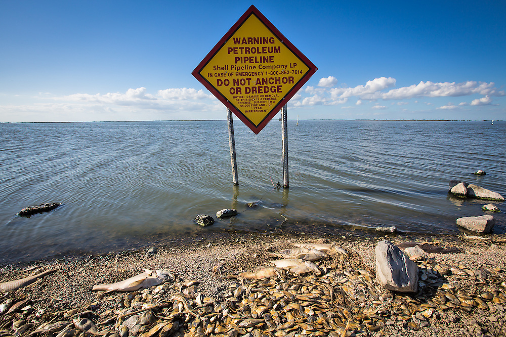 Fish kill off Island Road in Terrebone Parish. Island Road connects Isle de Jean Charles and Pointe au Chien. Officials confirmed low dissolved oxygen levels in the water alongside Island Road in Isle de Jean Charles caused the fish kill in October, which was unseasonably warm.