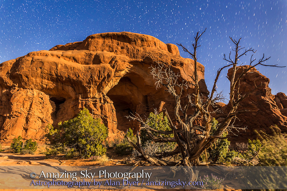 Star trails behind a gnarled tree and rock formation at Arches National Park, in moonlight with illumination from a waning gibbous Moon. <br /> <br /> This is a stack of 4 x 40-second exposures for short circumpolar star trails around Polaris at left, all with the 24mm lens at f/4 and Canon 6D at ISO 1600.