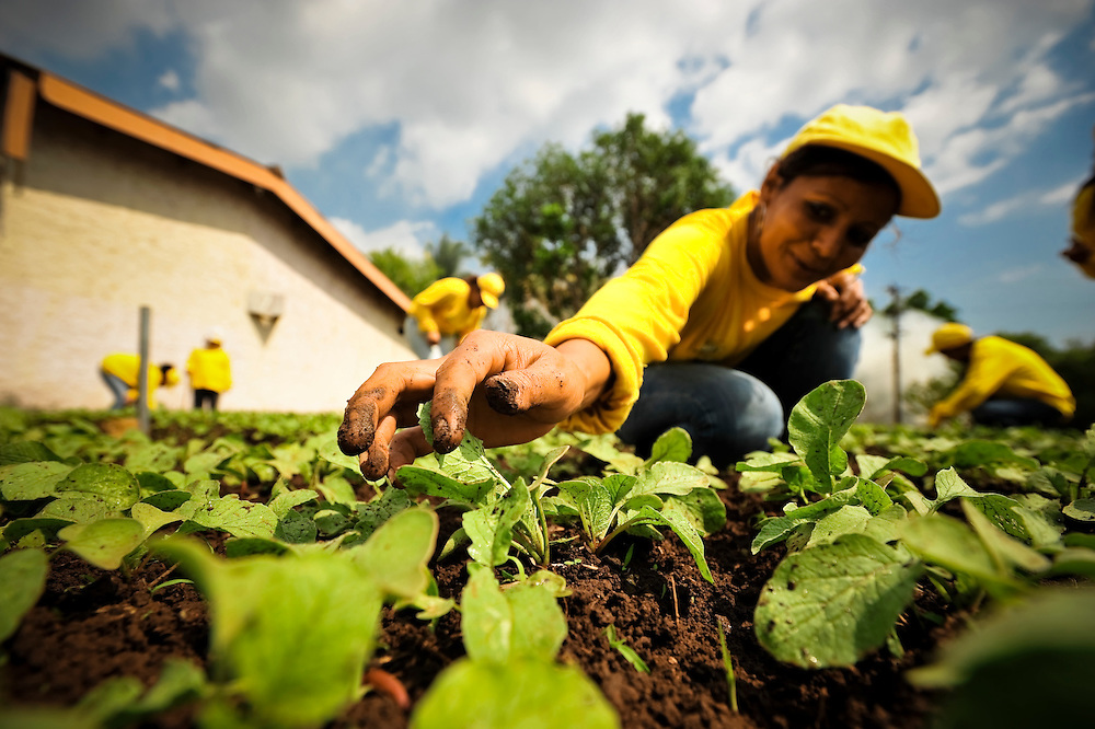 "Ana Cecilia Delgado, 32, tends a radish garden at the Granja for women in El Salvador. The Granja, a newly launched project, is a working farm that teaches female inmates agriculture skills. In exchange for their work, inmates enjoy better living conditions and more personal freedoms than they had previously at Illopango prison in San Salvador, El Salvador. Delgado, who is halfway through a five-year prison sentence for extortion charges, is thrilled to have been moved to the Granja, says she doesn't mind the work, because she prefers, ""to have something to do""."