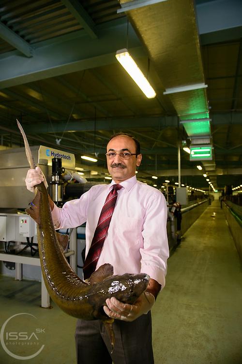 GM / Acting CEO Aqua Orbis holding Siberian sturgeon in Abu Dhabi farm