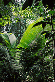 Tropical nature: biomes, ecology, vegetation: rainforest, savanna, aquatic. montane, xeric, desert
