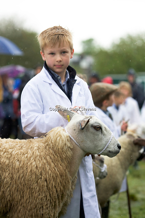 Livestock at Otley Show 2017