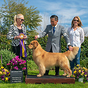 Golden Retriever Club of San Diego 2019