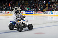 KELOWNA, CANADA - OCTOBER 25: Rocky Racoon, the mascot of the Kelowna Rockets enters the ice on his Polaris Quad against the Brandon Wheat Kings on October 25, 2014 at Prospera Place in Kelowna, British Columbia, Canada.  (Photo by Marissa Baecker/Shoot the Breeze)  *** Local Caption *** Rocky; mascot;