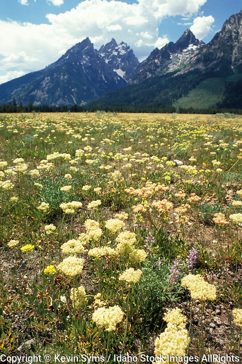 THIS PHOTO IS AVAILABLE FOR WEB DOWNLOAD ONLY. PLEASE CONTACT US FOR A LARGER PHOTO. Wyoming. Grand Teton NP. Spring