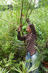 Carol Klein sawing a branch of a willow