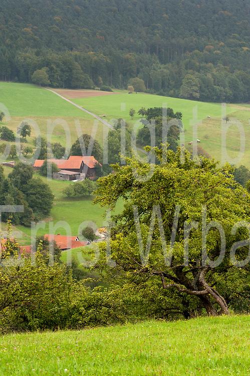 romantisches Tal, Wald, Bäume, Bauernhäuser, Rohrbach, Odenwald, Naturpark Bergstraße-Odenwald, Hessen, Deutschland | romantic valley, Rohrbach, Odenwald, Hessen, Germany