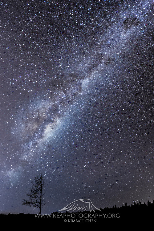 A barren tree silhouetted against a luminous Milky Way, in the Southland forest, Invercargill, New Zealand.