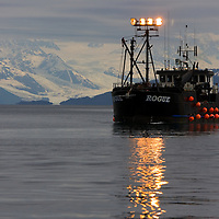 A crab fishing/tendering vessel cruises College Fiord and Port Wells in Prince William Sound working as a fish buyer for Peter Pan Seafoods. The larger vessels buy salmon from smaller, gillnet vessels and ferry the catch to the City of Valdez or Cordova, Alaska for processing.
