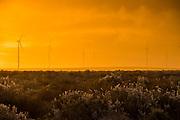 Landscape of the Sere Wind Farm at sundown