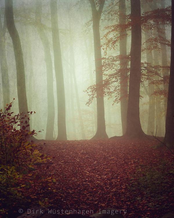 Misty November morning in a forest<br /> <br /> Prints &amp; more: https://society6.com/product/november-light-rp6_print#1=45