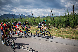 Matteo Pelucchi (ITA) of Bora - Hansgrohe during Stage 3 of 24th Tour of Slovenia 2017 / Tour de Slovenie from Celje to Rogla (167,7 km) cycling race on June 16, 2017 in Slovenia. Photo by Vid Ponikvar / Sportida
