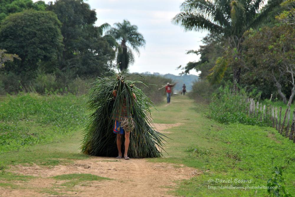 Man dragging palm fronds near San Lorenzo de Moxos, Beni, Bolivia