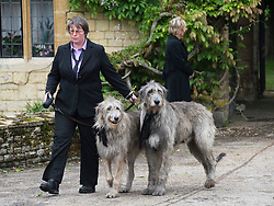 © London News Pictures. 08/06/2012. Thame, UK.  The Gibb family dogs leaving the home of former Bee Gee Robin Gibb on its way to St Mary's Church in Thame, Oxfordshire for the funeral of Robin Gibb on June 8, 2012. Robin Gibb died on May 20, 2012 aged 62 following a long battle against cancer. Photo credit: Ben Cawthra/LNP
